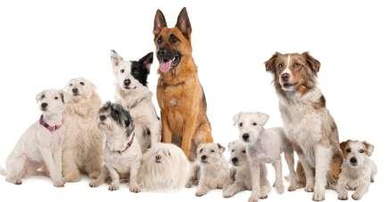 large group of dog breeds sitting together