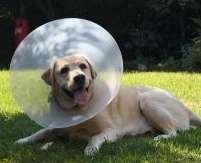 e-collar for dog