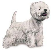 West Highland white terrier dog image