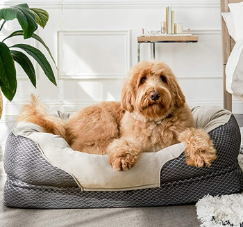 orthopedic dog bed with padded bolsters