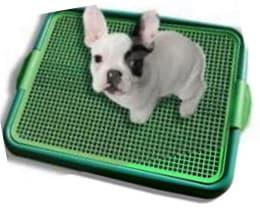 klean paws dog potty