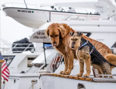 two dogs on a boat in harbor