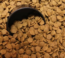 dog kibble with scoop