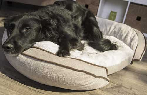 cooling memory foam round dog pillow bed