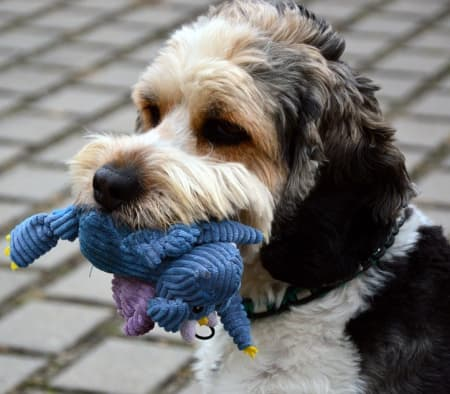 cute dog with soft toy in mouth