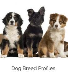 nine dog breeds illustrated