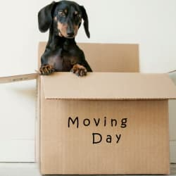 dog in a moving box