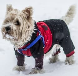 small dog in the snow