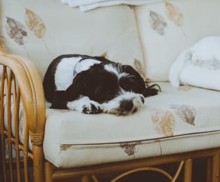 small dog napping on bamboo love seat