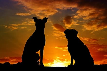 dogs sitting at sunset