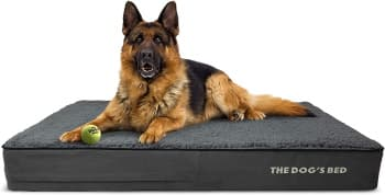 the dogs bed orthopedic bed