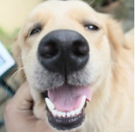 Dog close showing teeth
