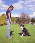 dove crestwell dog training