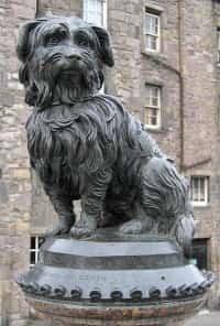 skye terrier statue