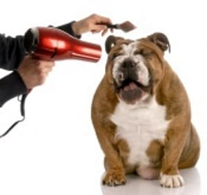 dog having hair dried with hair dryer