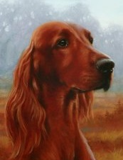 Irish Setter - Link Below