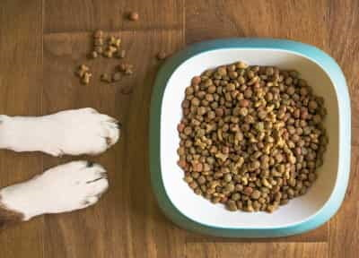 dog paws next to bowl of kibble