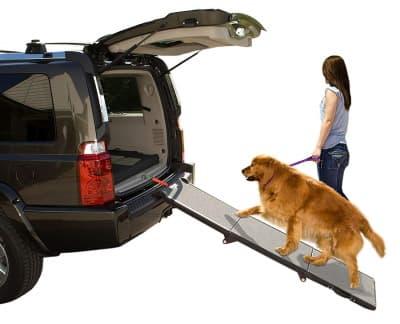 pet using folding car ramp for dog