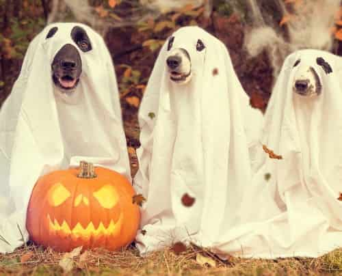 pumpkin with three dogs