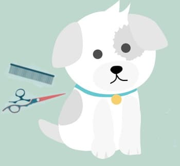 puppy with grooming tools