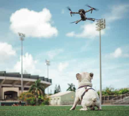 puppy watching a drone