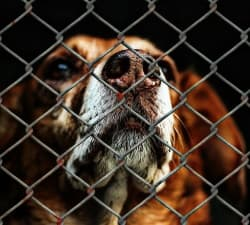 dog waiting in a shelter
