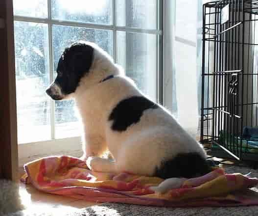 puppy sitting in window