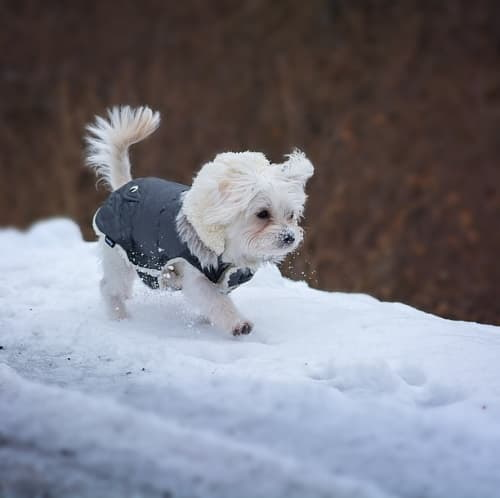 small dog walking in the snow