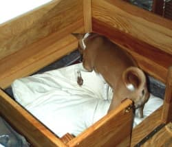 whelping box for new puppies