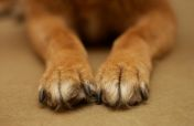 dog paw care, dog paws tlc!