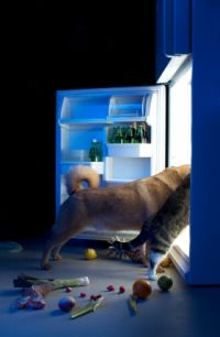 natural organic dog food, dog and cat looking in fridge