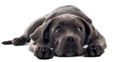 dog lying down looking sad