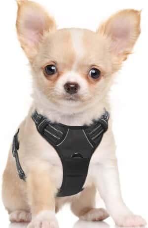 small dog harness by rabbitgoo