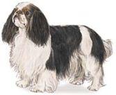 English Toy Spaniel - Toy Dog Breeds