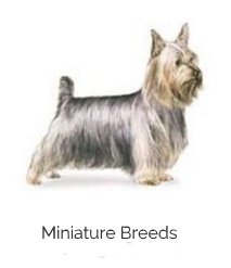 miniature dog breeds